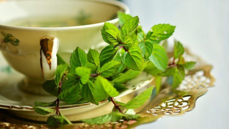 Čerstvá zelenina a bylinky i v zimě
