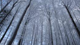 Beskydské pustevny nabídnou stezku mezi korunami stromů
