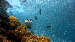 Celníci v Ostravě odhalili chráněné korály